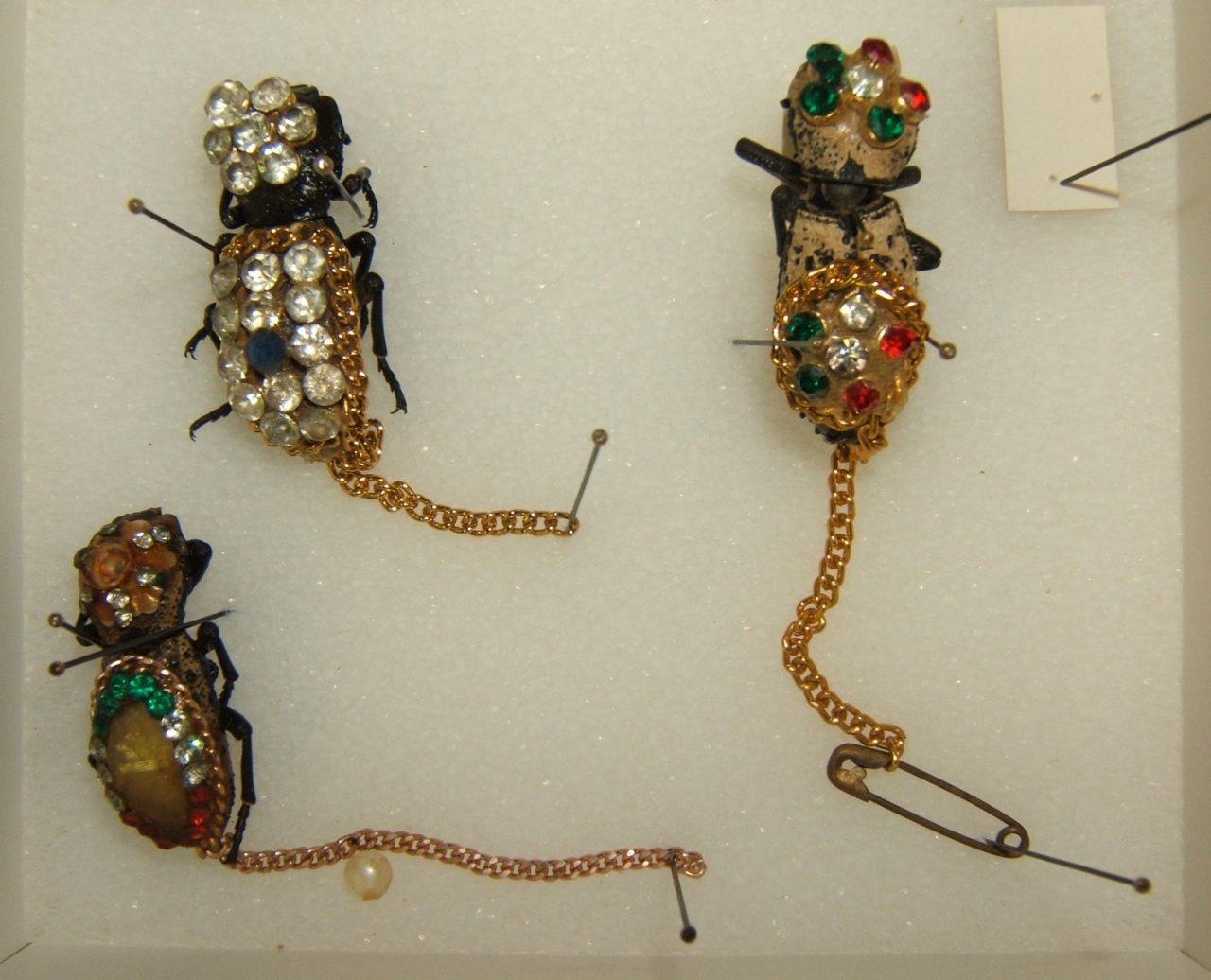 Fotografía de Shawn Hanrahan, Universidad de Texas A & M colección de insectos en College Station, Texas. Este archivo se encuentra bajo la licencia Creative Commons.